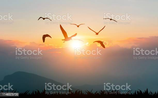 Photo of Birds flying freedom on the mountains and sunlight silhouette