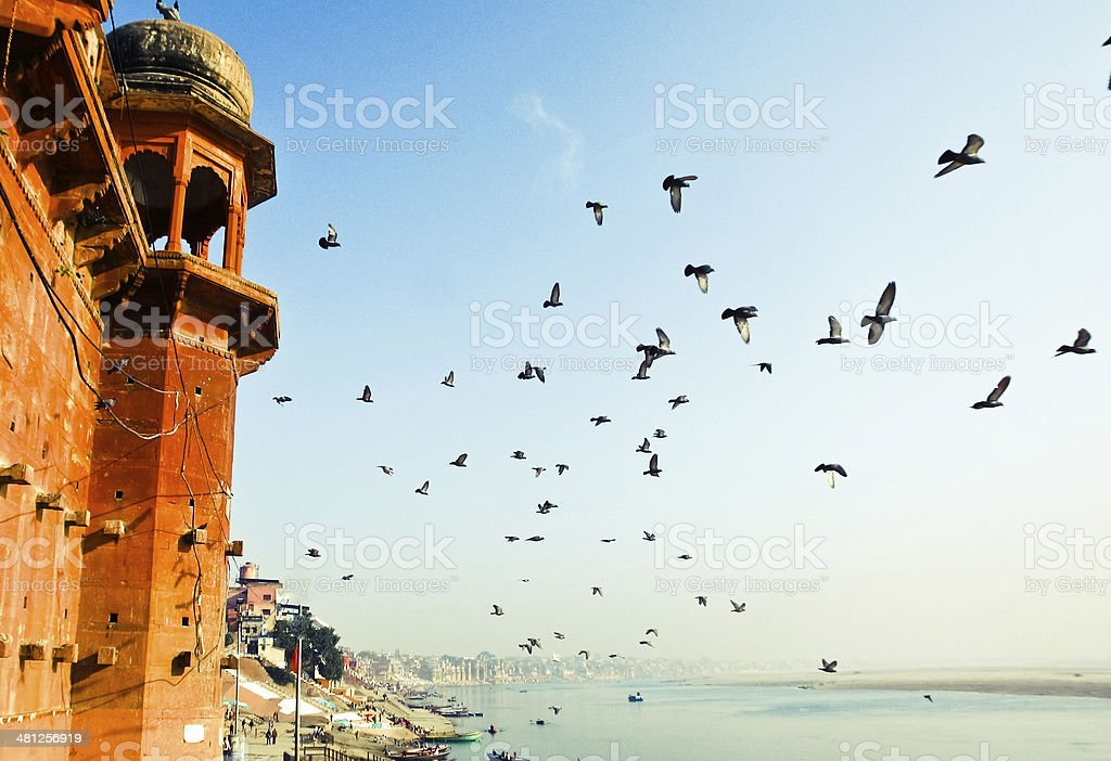 Birds flying from the ancient palace tower stock photo