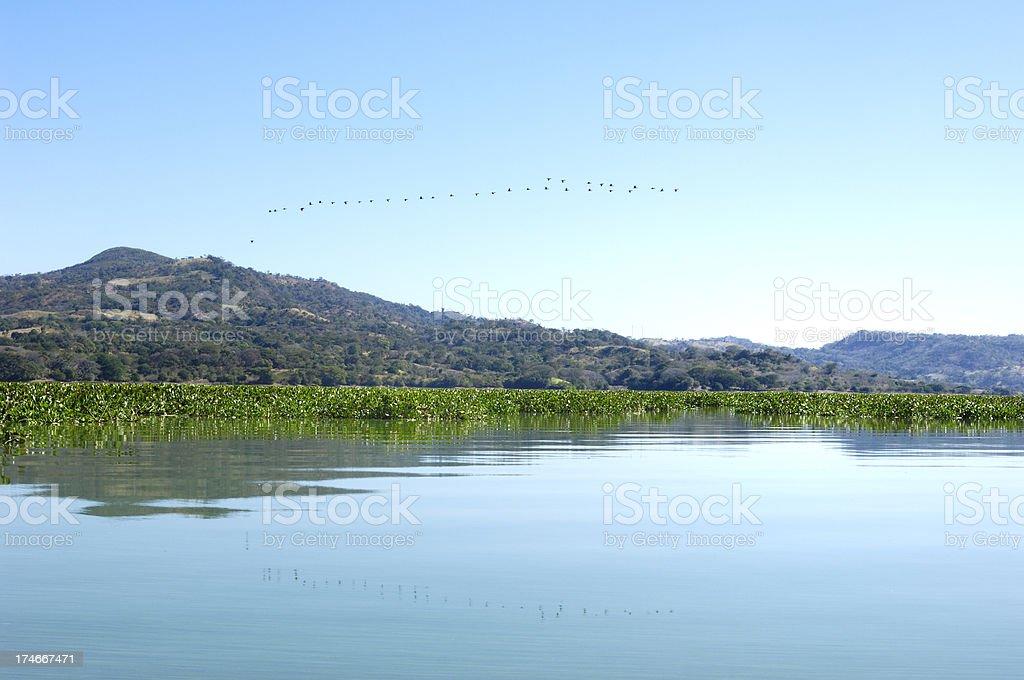 Birds Flying in Formation over Suchitlan lake, El Salvador royalty-free stock photo