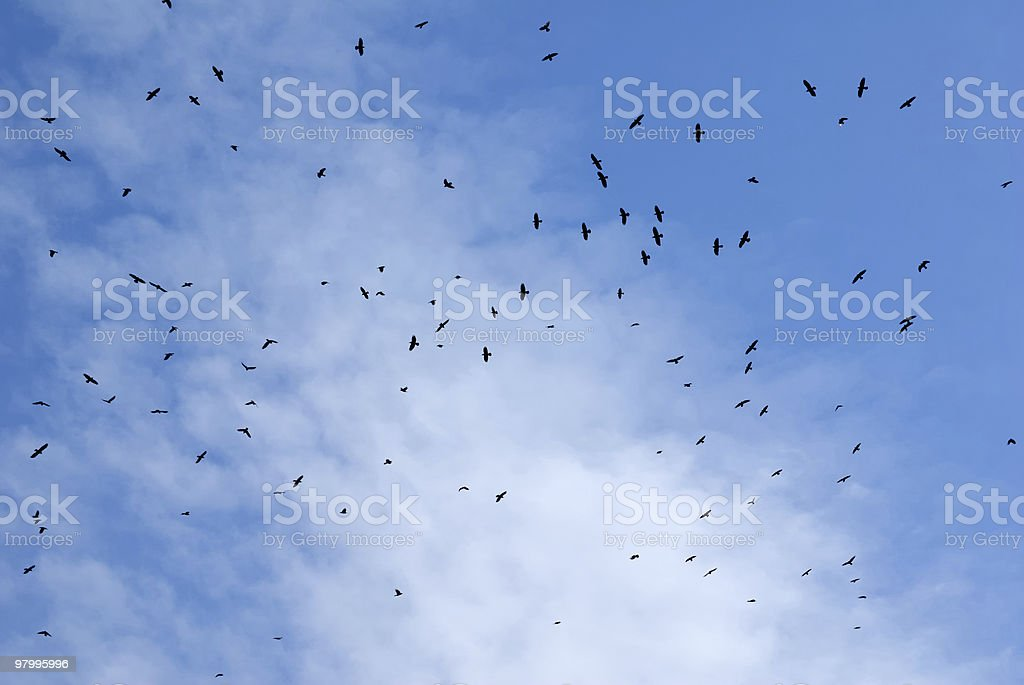 Birds flying in the sky. royalty-free stock photo