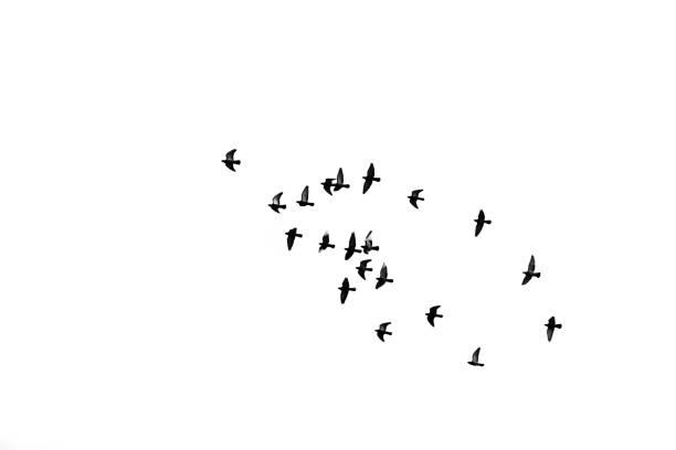 birds flying into sky stock photo