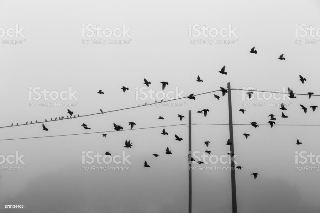 Birds flying near power lines in the fog stock photo