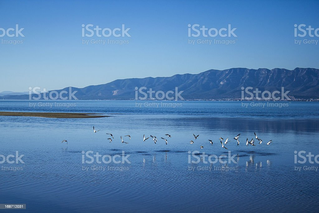 Birds flying on water stock photo