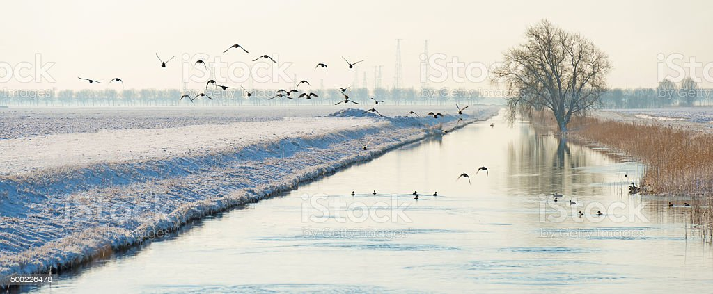 Birds flying over a snowy canal in winter stock photo