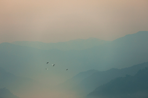 Birds flying over mist mountains in the morning