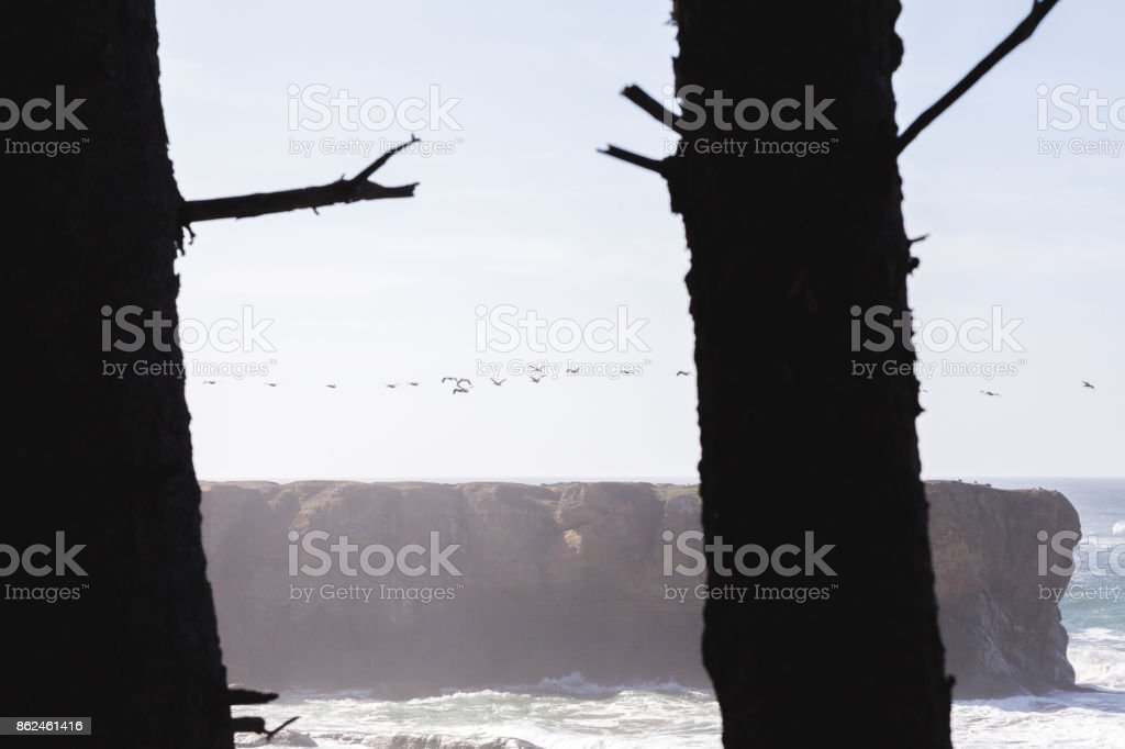 Birds Flying Over Rock Formation in the Pacific Northwest stock photo