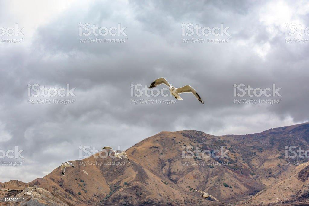 Flock of birds flying in the sky over the Great Salt lake in Utah on...
