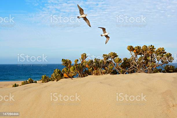 Photo of Birds Flying Over Sand Dune at the Beach