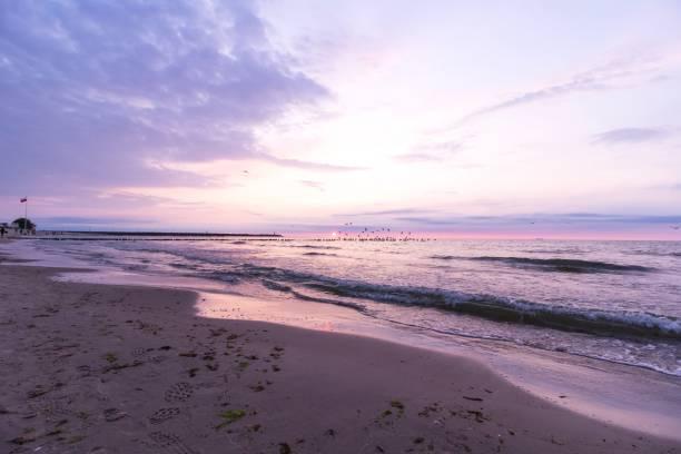 Birds flying over the breakwater, Baltic Sea – zdjęcie