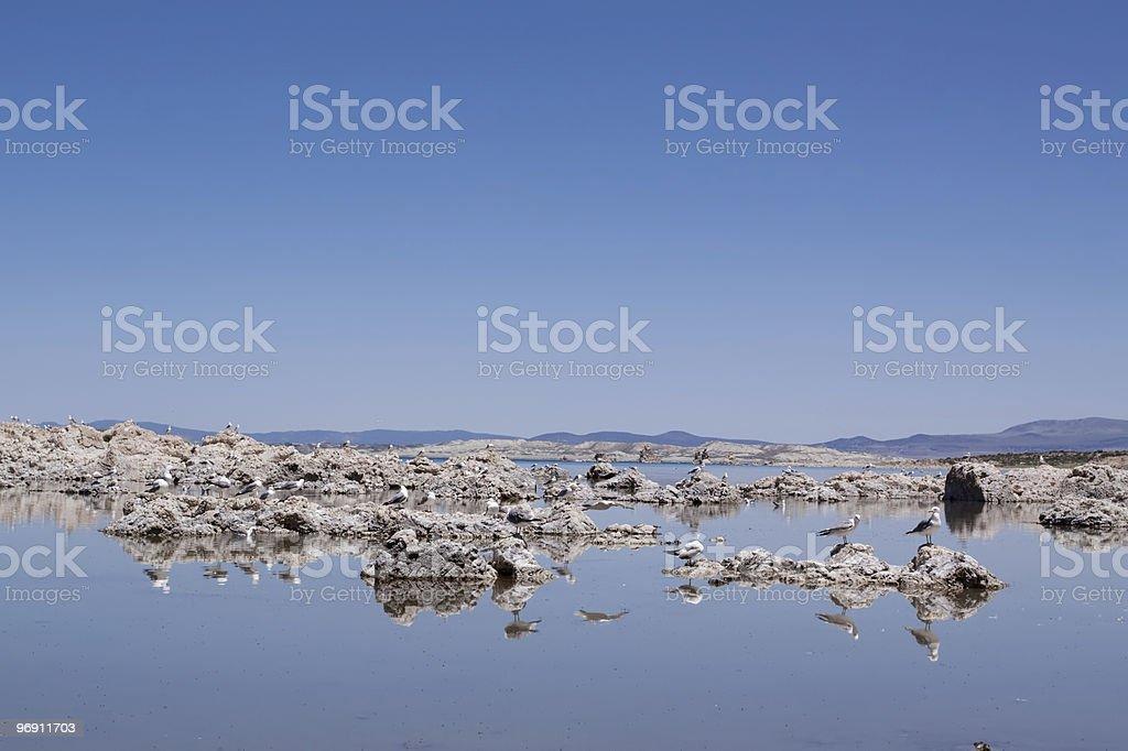 Birds flying over the Mono Lake royalty-free stock photo