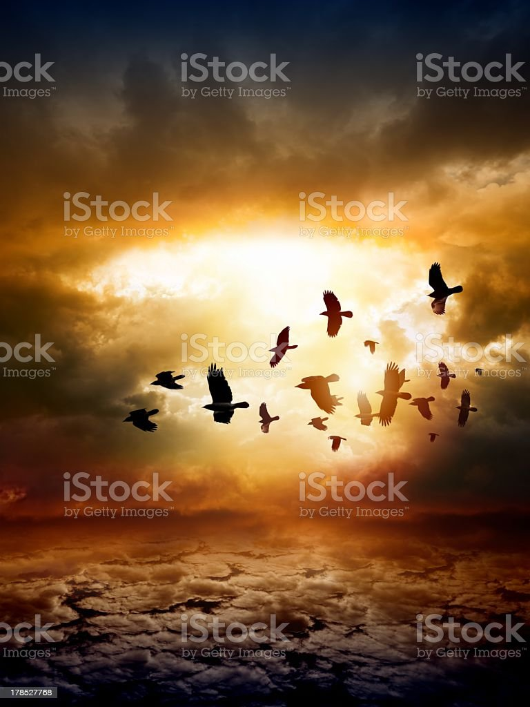 Birds flying over the ocean at sunset royalty-free stock photo