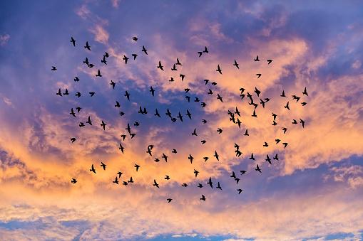 birds flying over the sunset sky