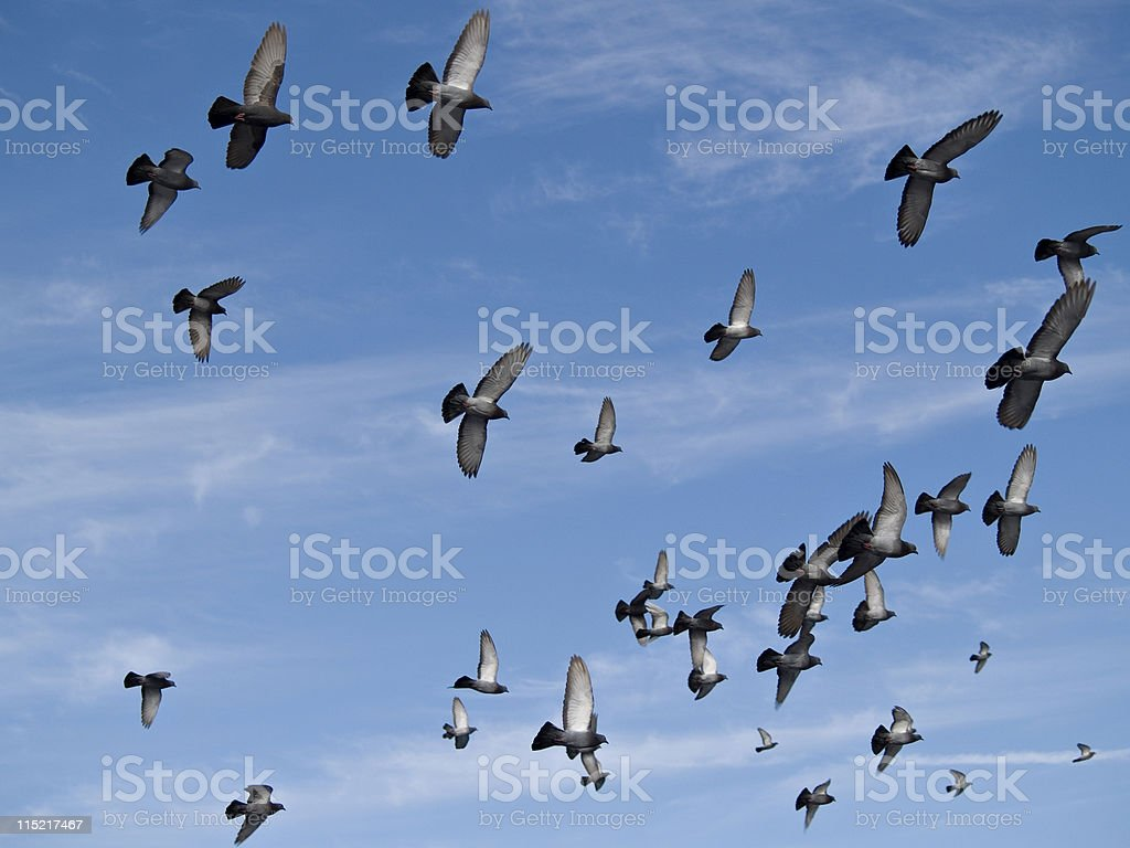 Birds Flying - Peace to the World royalty-free stock photo