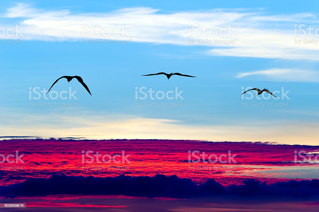 Birds Flying Silhouettes – Foto