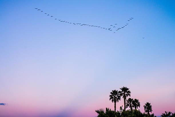 BIrds flying south stock photo