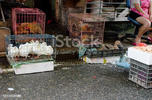 Hens, doves and ducks enclosed in cages at a wet market in the streets of Shanghai, China