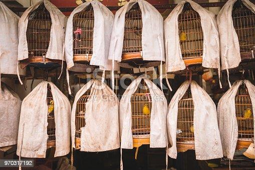 Birds for Sale, Bird Garden in Mong Kok, Kowloon, Hong Kong