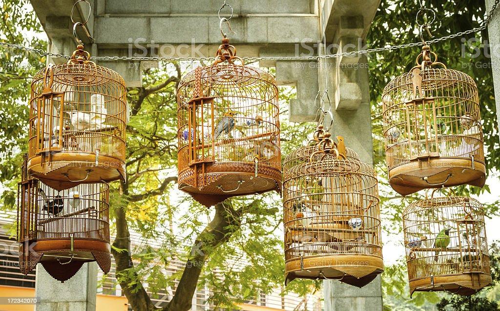 Birds For Sale stock photo