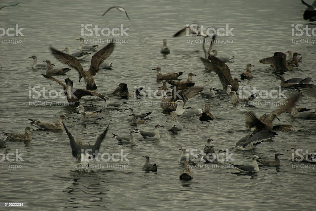 Birds frantic feeding stock photo
