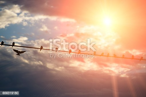 istock Birds gather on a line with sun and flare 656319180