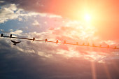 Birds gather on a line with sun and flare