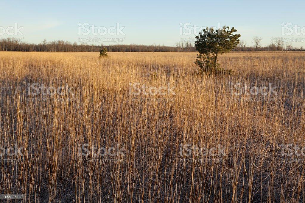 Birds Hill Provincial Park Manitoba stock photo