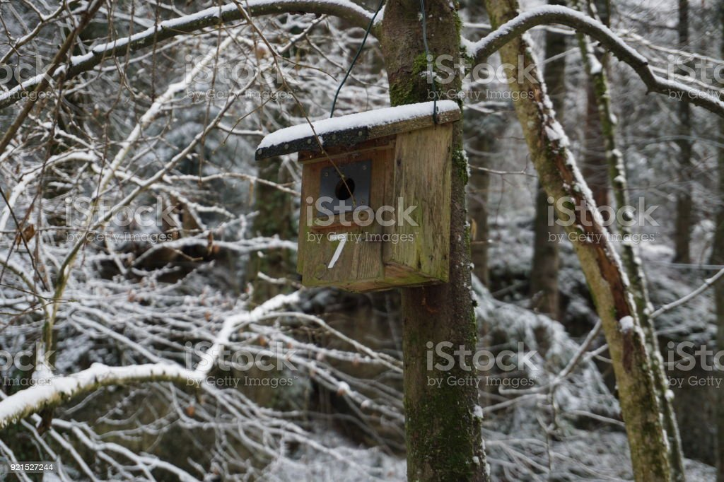 bird's house on the tree stock photo