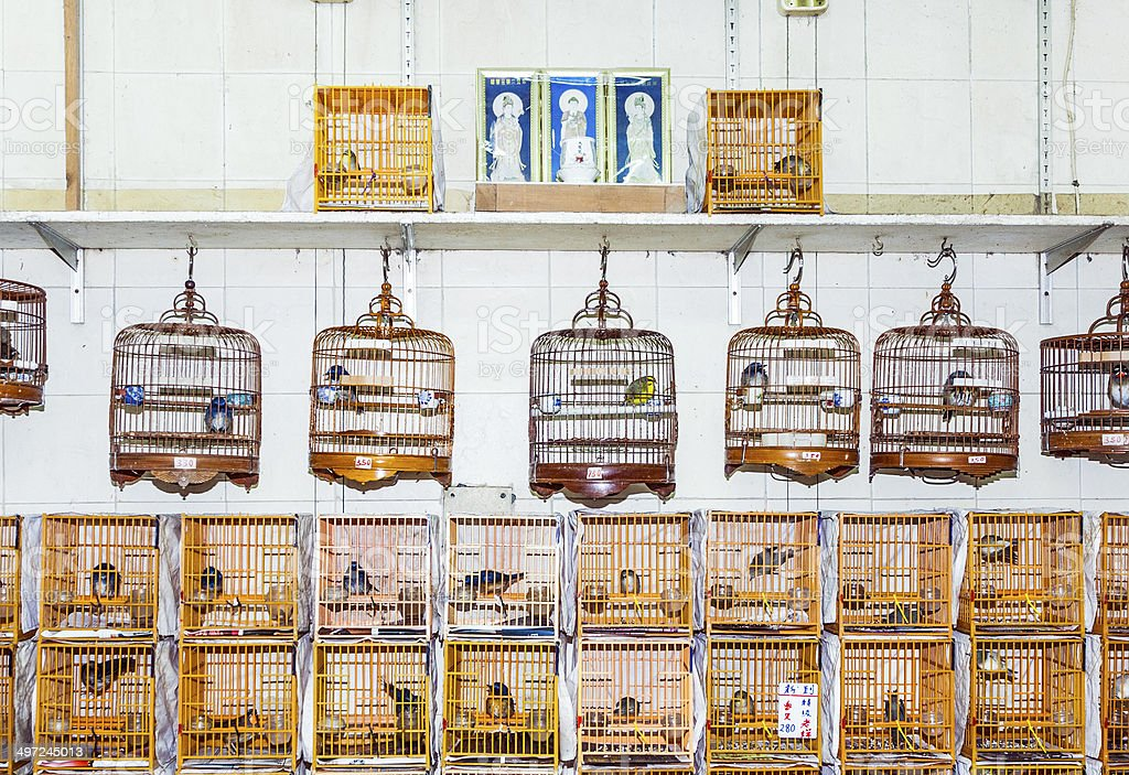 birds in a cage at the birds market in Hongkong royalty-free stock photo