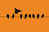Many birds in silhouette against a white background perching on a single cable/wire with a single bird flying away and acting different