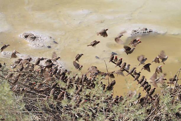 Birds in a row stock photo