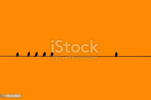 Many birds in silhouette against a orange background perching on a single cable/wire with a single bird away by itself.