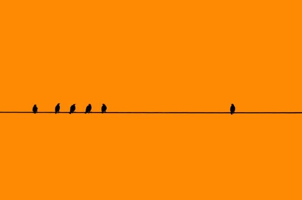 Birds in a row with one by itself picture id1169050605?b=1&k=6&m=1169050605&s=612x612&w=0&h=r3tuxjeuce2ru0viowsrprlmyroj7cxu5oo4ytvfwwq=