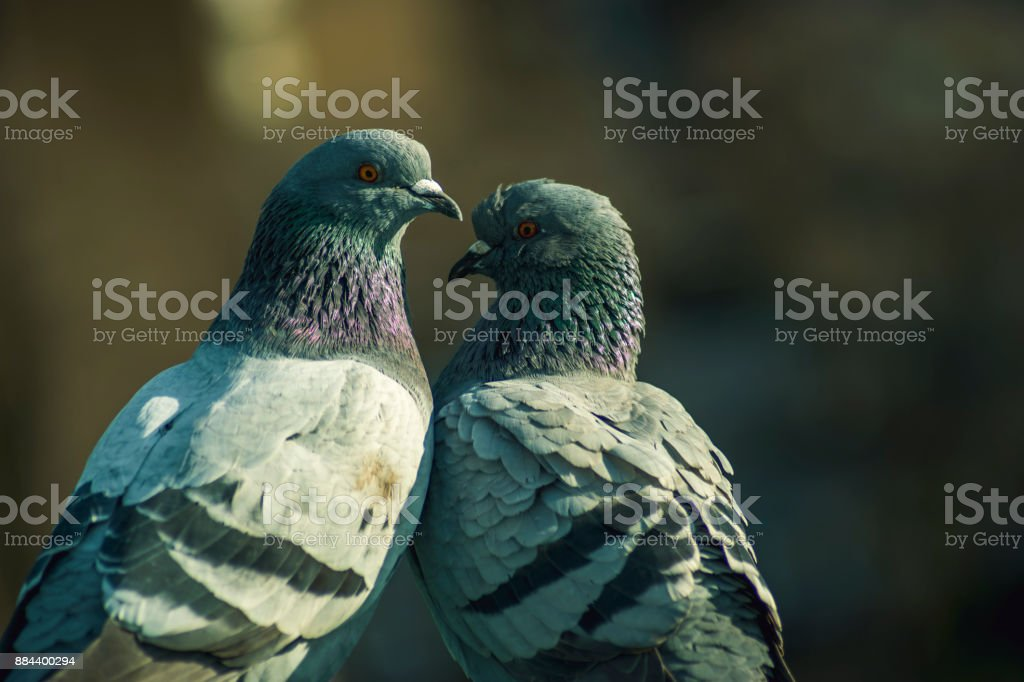 Birds in Amsterdam Vondelpark urban park stock photo
