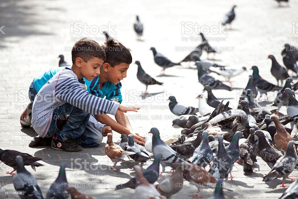 Birds in Beirut, Lebanon stock photo