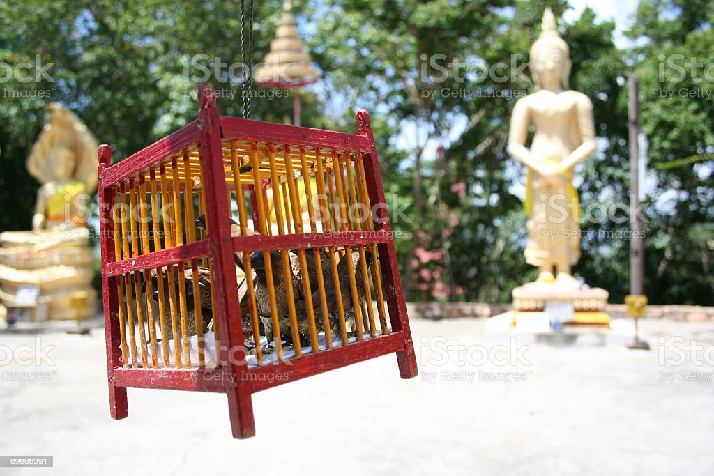 Birds in cage - Thailand royalty-free stock photo