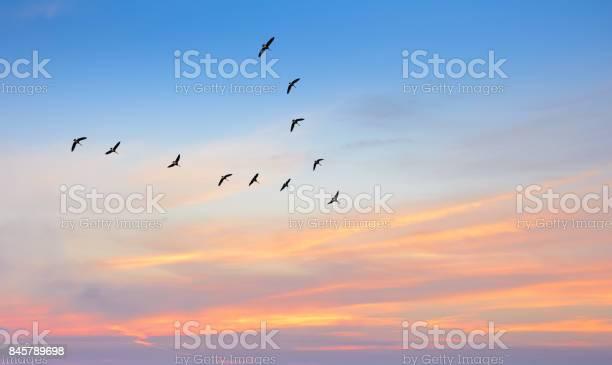 Birds in flight against beautiful sky background picture id845789698?b=1&k=6&m=845789698&s=612x612&h=sn kwuw7gjg4ok7 qtt1036onhuumgbugcrfs77q1yu=