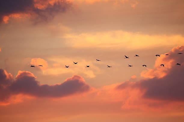 Birds in flight at sunset background stock photo