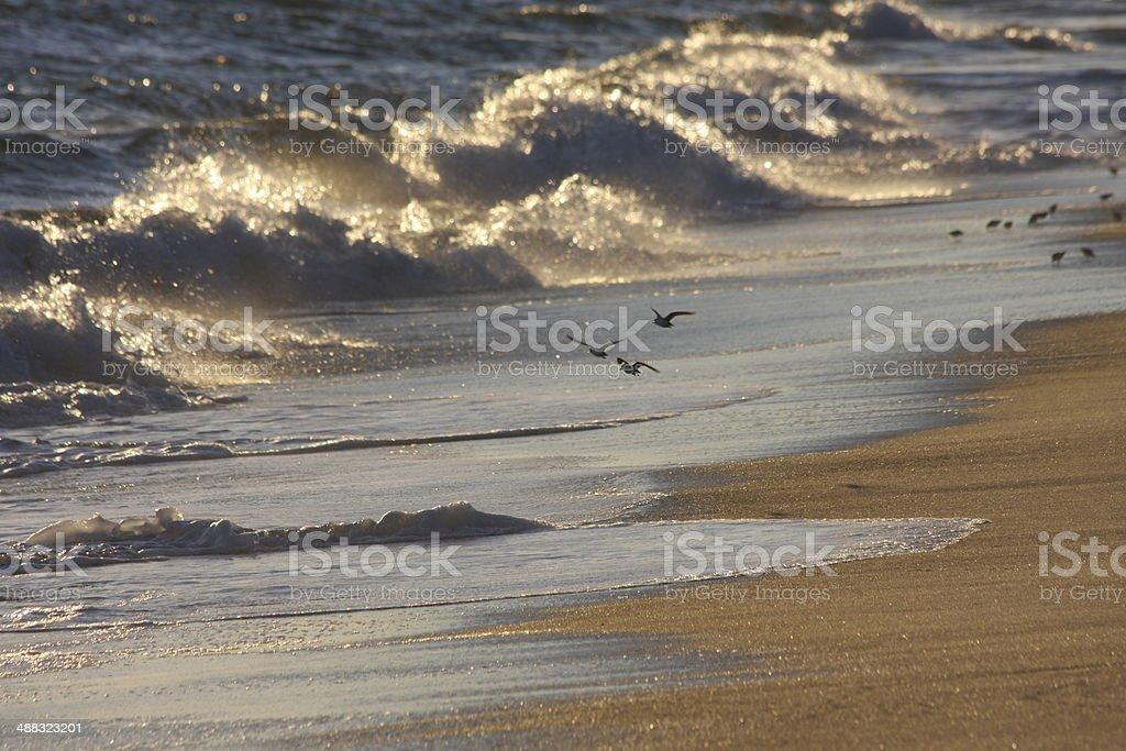 birds in flight on Nantucket beach stock photo