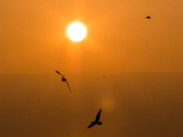 Birds in flight over the Sea of Galilee in Israel stock photo