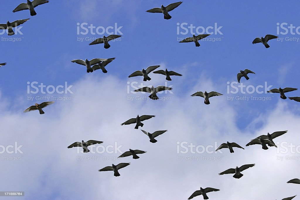 Birds in Flight royalty-free stock photo