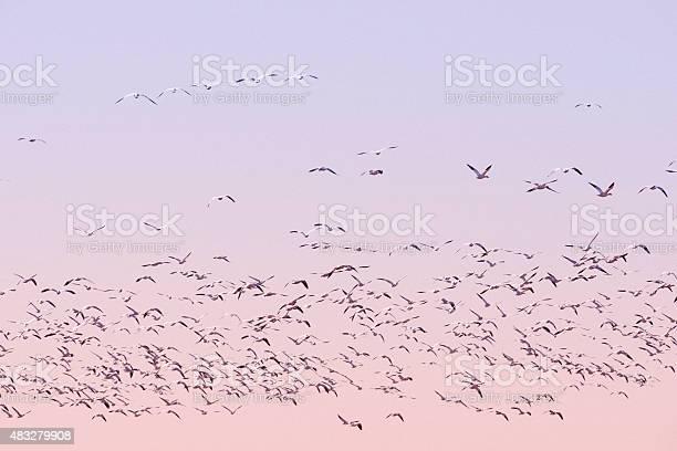 Birds In Flight Stock Photo - Download Image Now