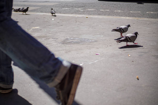 Birds in France stock photo