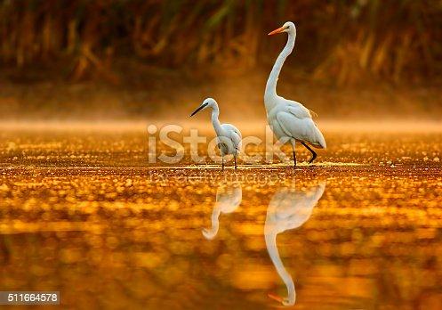 istock Birds in golden misty morning 511664578