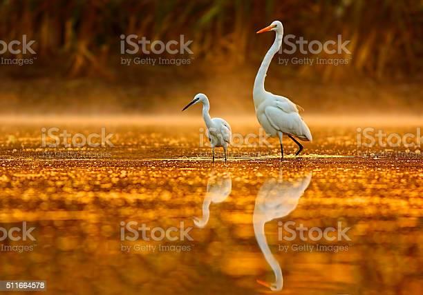 Birds in golden misty morning picture id511664578?b=1&k=6&m=511664578&s=612x612&h= nrqwpr6lymxneemgvnfelapib26iyowxwodrmdaj4i=