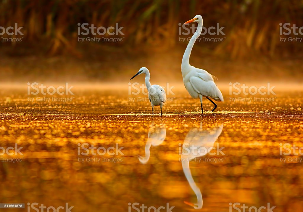 Birds in golden misty morning stock photo