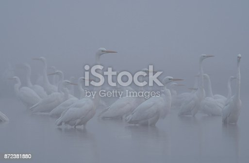 Birds  in misty morning