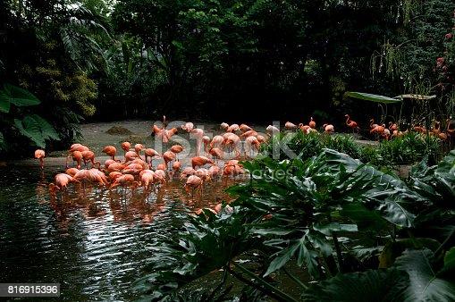 istock Birds in Singapore 816915396