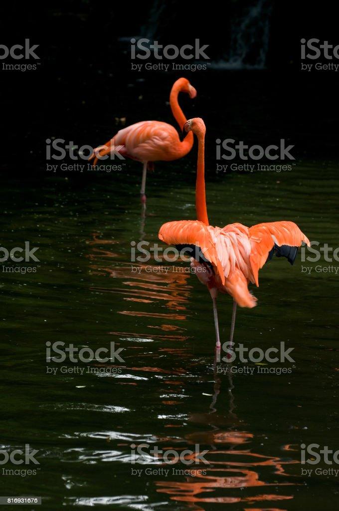 Birds in Singapore stock photo