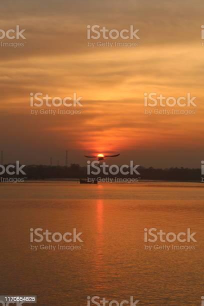 Birds in sunset