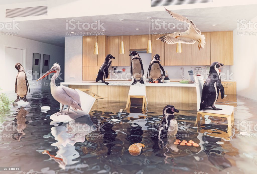 birds in the flooding kitchen stock photo